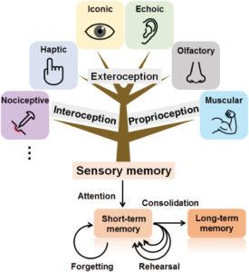 cognitive load - sensory memory