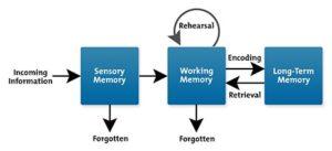 cognitive load theory - sensory input model